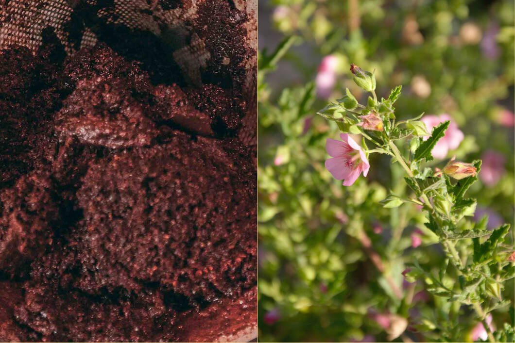 Use Coffee Grounds in the Garden - Ground Coffee and Flowers in the garden