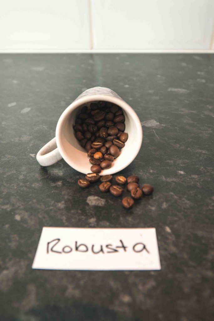 Robusta beans in a cup