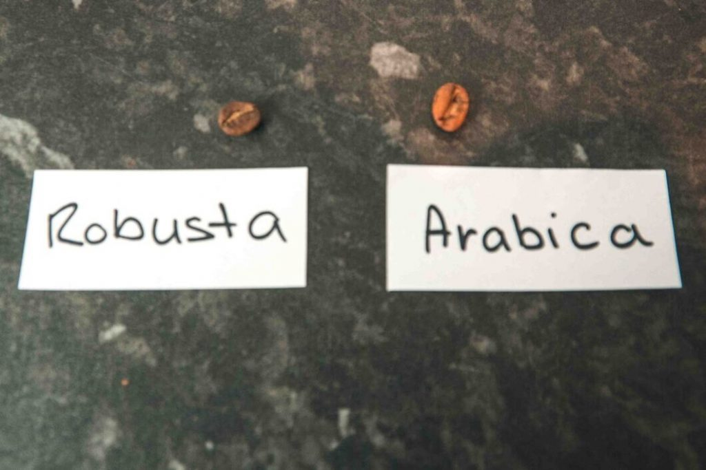 shape of robusta and arabica beans