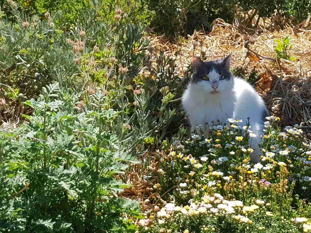 Cat in the weeds