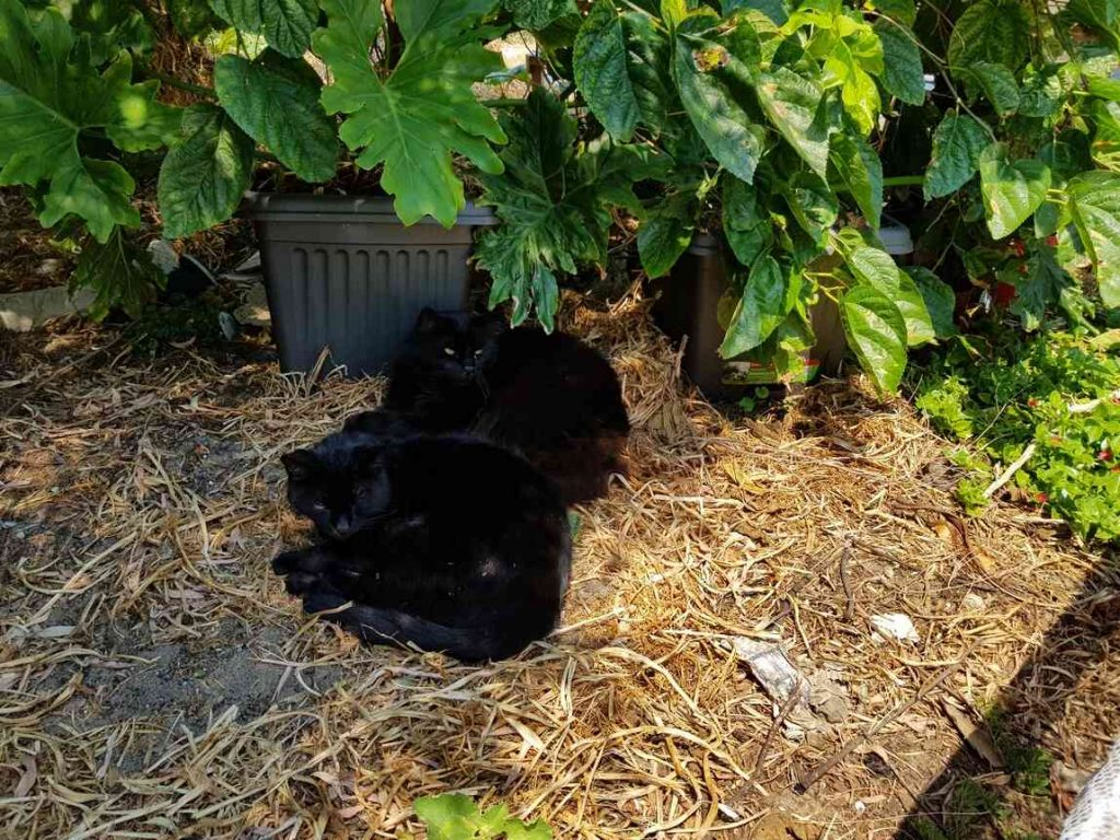 Two cats sleeping in the garden